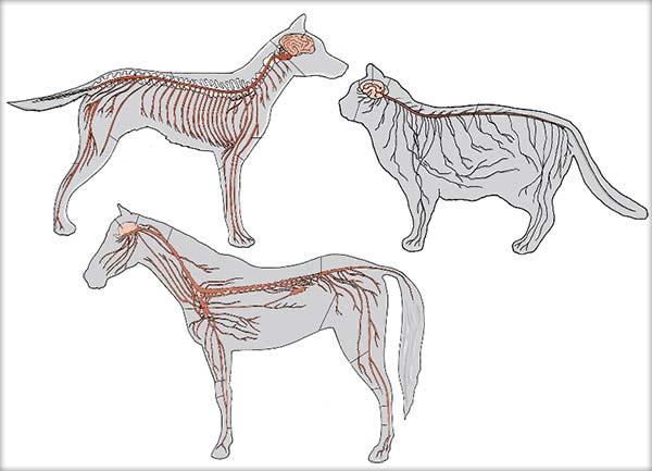 Sistemul nervos la animale
