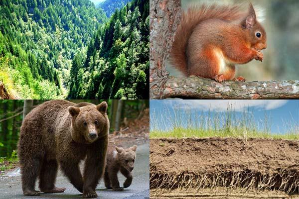Vegetatia, Fauna şi Solurile Europei